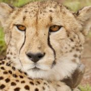 Südafrika Golf und Safari